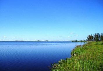 Wędkowanie nad jeziorem Białym: zdjęcia i opinie. Niezwykłe Białe – jezioro w regionie leningradzkim?