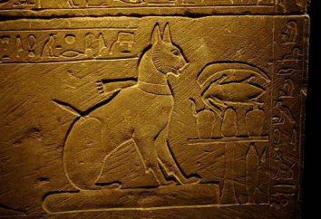 Quantos gatos vive? História e Factos