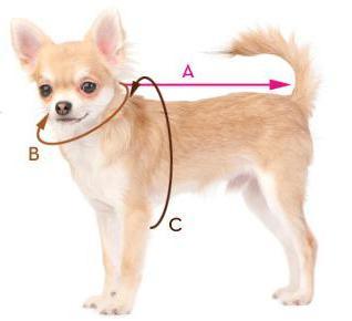 entfernen kaugummi hundepfote