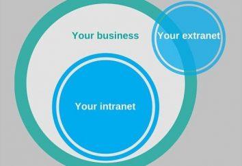 Extranet: o que é, por que precisamos e como funciona?