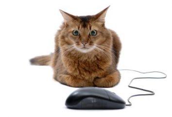Dlaczego powiesić myszkę?