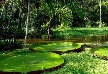 Lugares de interés de América del Sur: Amazon rainforest, Machu Picchu (photo)