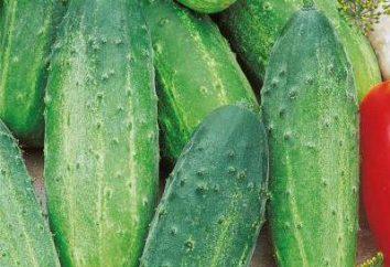 Concombre Far 27: critiques et les caractéristiques des variétés agriculteurs