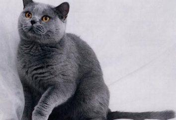 Kot rzuca dużo. Co robić i jak prawidłowo dbać o swoje włosy?