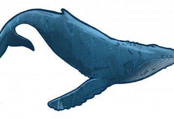 Keith – ein Fisch oder ein Säugetier? Interessante Fakten über Wale