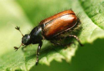 Warto wiedzieć: co jeść robaki