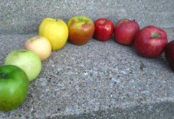 artesanato interessantes a partir de materiais naturais. Master-class em fazer faixas de maçãs
