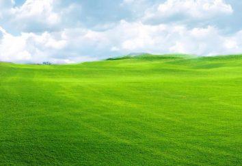 Interpretazione dei sogni: un campo di grano. Che campo sogno