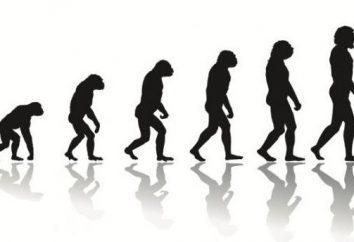Lois et règles de l'évolution. Processus évolutif