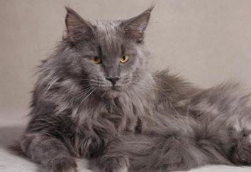 Do najbardziej znanych ras kotów: zdjęcie i imię