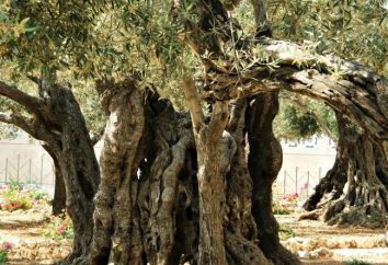 Słynne chrześcijańskie kapliczki: Ogród Getsemani