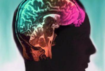 Pediatryczny Neuropsychologia. Centrum Pediatrii Neuropsychologia
