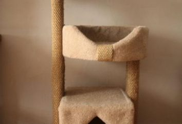 Jakie są domy i zarysowania stanowisk dla kotów?