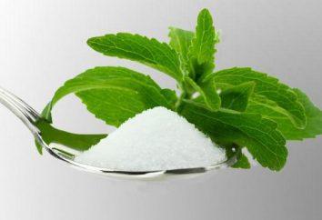 Stevia sustituto del azúcar. edulcorantes naturales