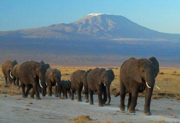 se gli elefanti possono nuotare e altri dettagli relativi agli elefanti