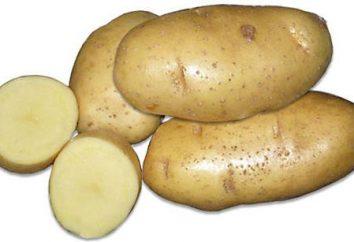 Haut rendement Skarb de pommes de terre: description de la variété