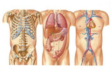 Ciało ludzkie: system. Który nauk badać ludzkie ciało?
