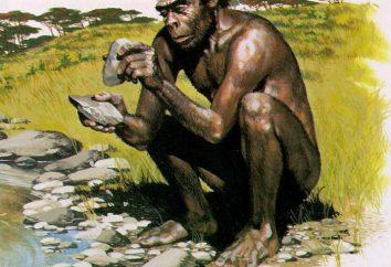 Homo habilis (Homo habilis) – hombre hábil: herramientas de caracterización