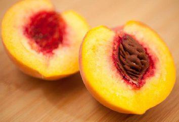 fruto indehiscente es una planta … fruto indehiscente: ejemplos