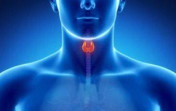 Antikörper gegen Thyreoperoxidase erhöht. Was bedeutet das, was Ursachen und wie gefährlich es ist?