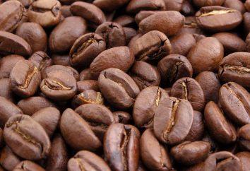 Che cosa è fatto di caffè? Dove fanno caffè? Produzione di caffè istantaneo