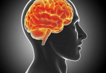 Demielinizzante malattia del cervello: il trattamento, previsioni e sintomi