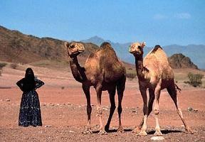 Penisola arabica. La bellezza del deserto e il mare
