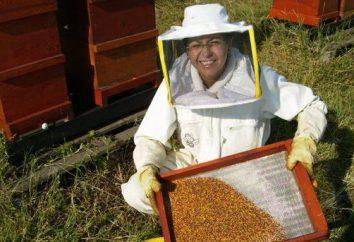 Les abeilles prennent soin des abeilles en hiver. abeilles soins technologie en hiver et au printemps