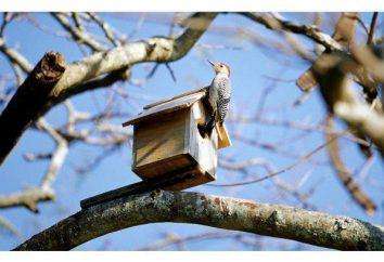 Jak zrobić domek dla ptaków? Dokonaj ptaszarni własnymi rękami. Rysunek, zdjęcie