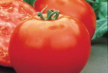 Pomidor Polbig: opis hybrydowymi pomidorów