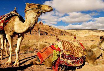 Jordan wiza: niezbędne dokumenty, w szczególności przyjmowanie i zalecenia