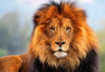Nome Leo: origem e significado. Leo: nome do recurso