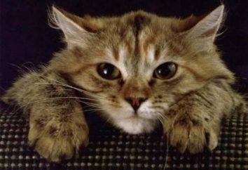 Cree que su gato se aburre usted? Tal vez sólo se enojó