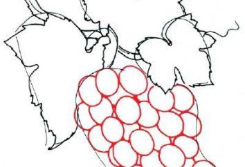 Jak narysować piękne winogrona?