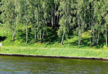 Khimki leśne: zakręty wokół budowy nowej autostrady M-11 Moskwa-Petersburg
