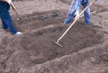 Solo: preparação para a plantação de culturas de frutas e vegetais. Preparo do solo no outono