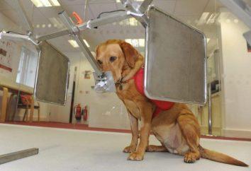 I ricercatori insegnano i cani per diagnosticare la malattia di Parkinson