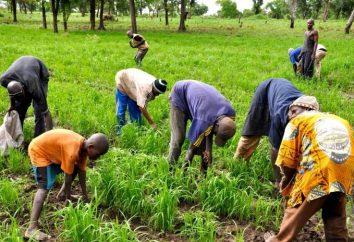 La sicurezza alimentare – la strada per un futuro felice