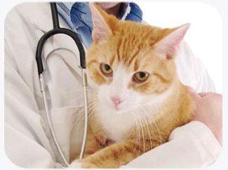 Jaka jest normalna temperatura kota?