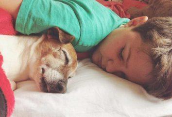 Pourquoi rêve d'un chien tué? Dream book dira!