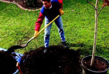 Comment planter un arbre? Parlons à ce sujet