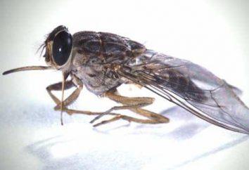 Fly CC – portador de una enfermedad mortal