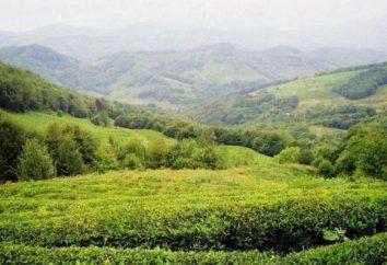 Las casas de té en Sochi: el pueblo de Uch-Dere, la historia y la cultura de consumo de té ruso
