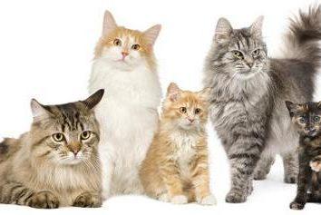 Cat-Metis: Description du caractère