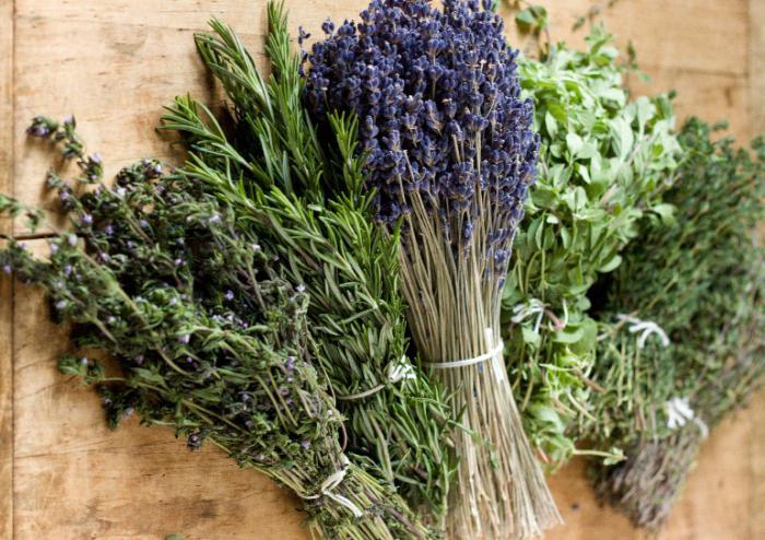 Savory e timo qual la differenza piante ornamentali e for Piante secche ornamentali
