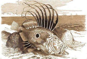Peixe Dory: uma descrição da forma, comportamentos e habitats