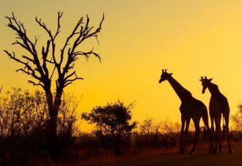 Kruger (parc national) photos, description