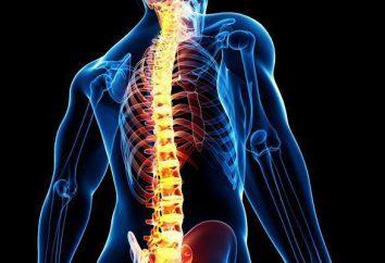 Die Wirbelsäule des Menschen: die Struktur. HWS Teilungs
