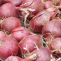 Come prepararsi per piantare le cipolle? Cipolle: semina e la cura