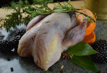 Partridge: l'élevage et l'entretien à la maison. La reproduction et l'entretien de perdreaux dans la maison comme une entreprise